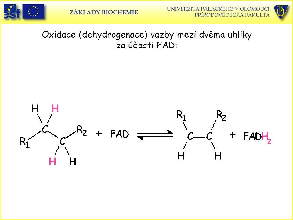 Oxidace (dehydrogenace) vazby mezi dvěma uhlíky za účasti FAD: