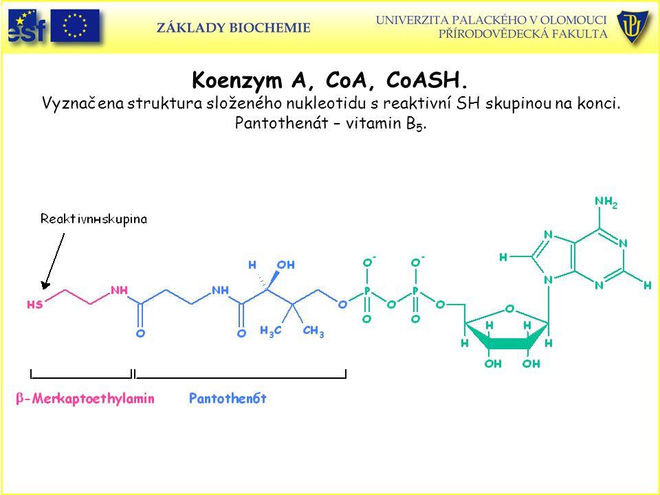 Koenzym A, CoA, CoASH.Vyznačena struktura složeného nukleotidu s reaktivní SH skupinou na konci.