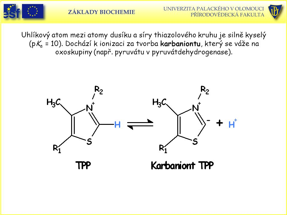 Uhlíkový atom mezi atomy dusíku a síry thiazolového kruhu je silně kyselý (pK a = 10). Dochází k ionizaci za tvorba karbaniontu, který se váže na oxos