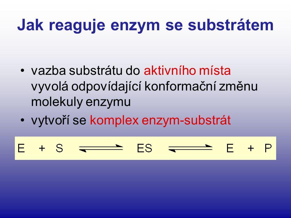 Jak reaguje enzym se substrátem vazba substrátu do aktivního místa vyvolá odpovídající konformační změnu molekuly enzymu vytvoří se komplex enzym-subs
