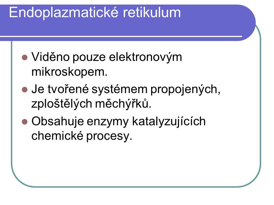 Endoplazmatické retikulum Viděno pouze elektronovým mikroskopem. Je tvořené systémem propojených, zploštělých měchýřků. Obsahuje enzymy katalyzujících