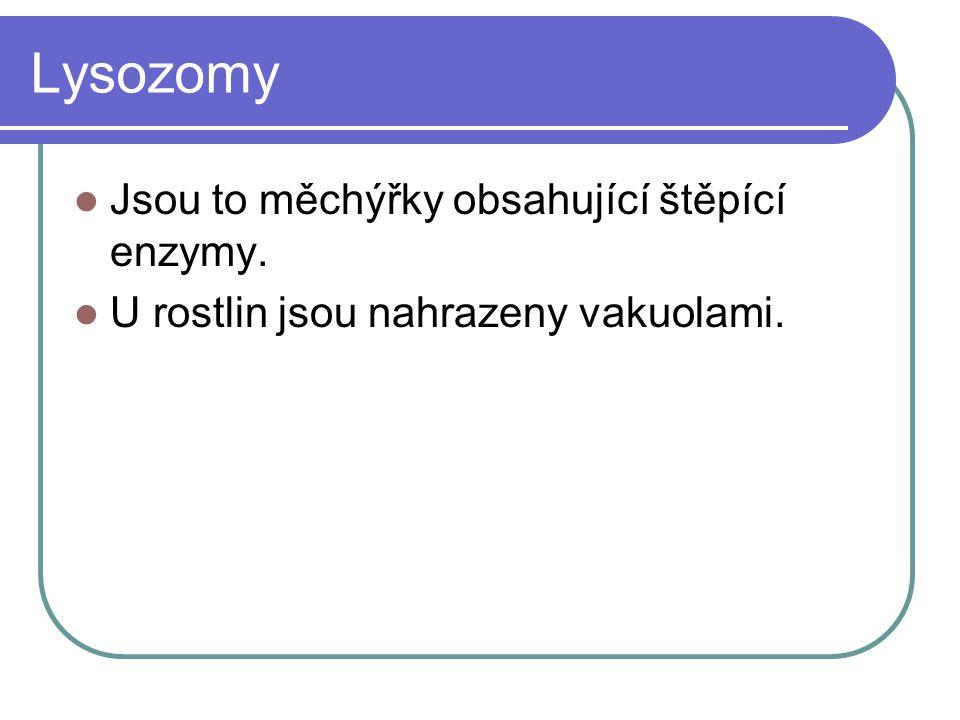Lysozomy Jsou to měchýřky obsahující štěpící enzymy. U rostlin jsou nahrazeny vakuolami.