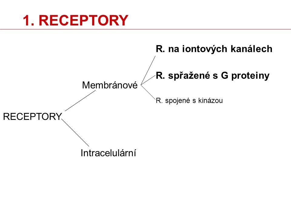 RECEPTORY Membránové Intracelulární R. na iontových kanálech R. spřažené s G proteiny R. spojené s kinázou 1. RECEPTORY