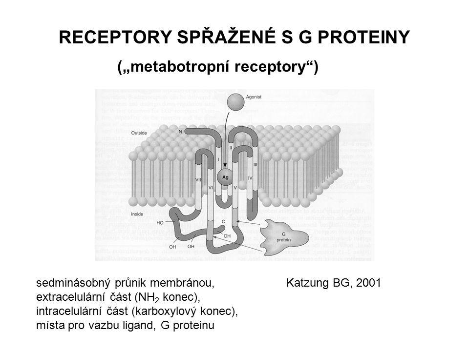 """RECEPTORY SPŘAŽENÉ S G PROTEINY (""""metabotropní receptory ) RECEPTOR G PROTEIN - trimér, , ,   jednotka: GTPázová aktivita, GDP  GTP, stimulace (G S ), inhibice (G I ) efektoru, aj G proteiny EFEKTOR"""