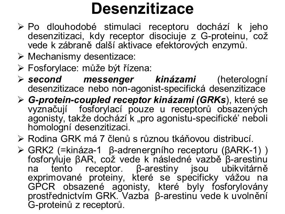 Desenzitizace  Po dlouhodobé stimulaci receptoru dochází k jeho desenzitizaci, kdy receptor disociuje z G-proteinu, což vede k zábraně další aktivace
