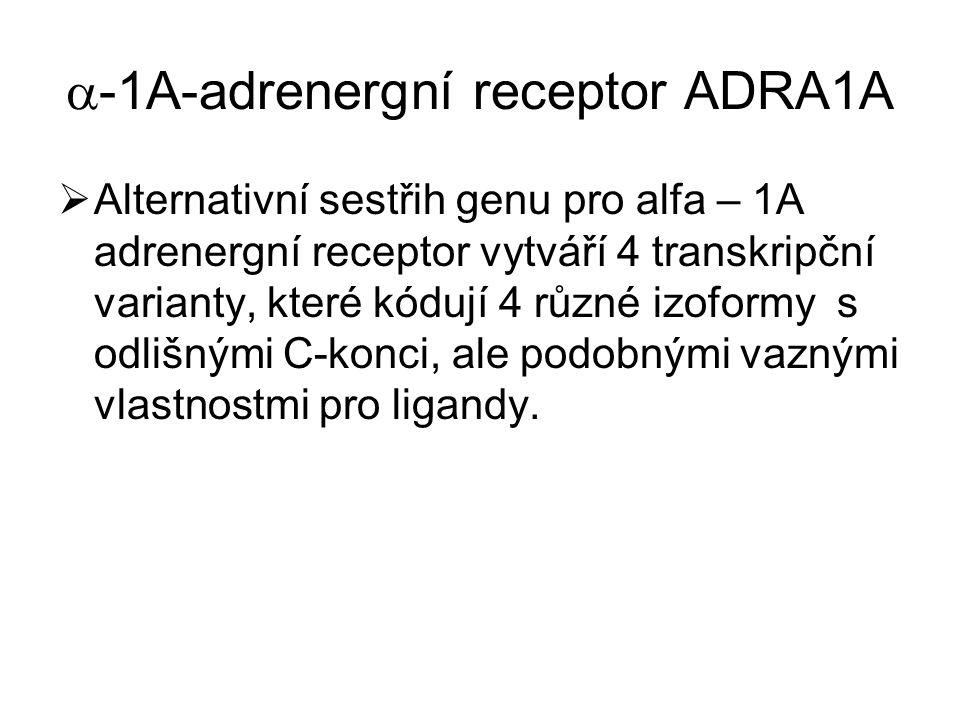  -1A-adrenergní receptor ADRA1A  Alternativní sestřih genu pro alfa – 1A adrenergní receptor vytváří 4 transkripční varianty, které kódují 4 různé i