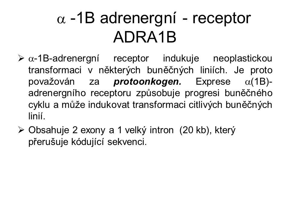  -1B adrenergní - receptor ADRA1B   -1B-adrenergní receptor indukuje neoplastickou transformaci v některých buněčných liniích. Je proto považován z