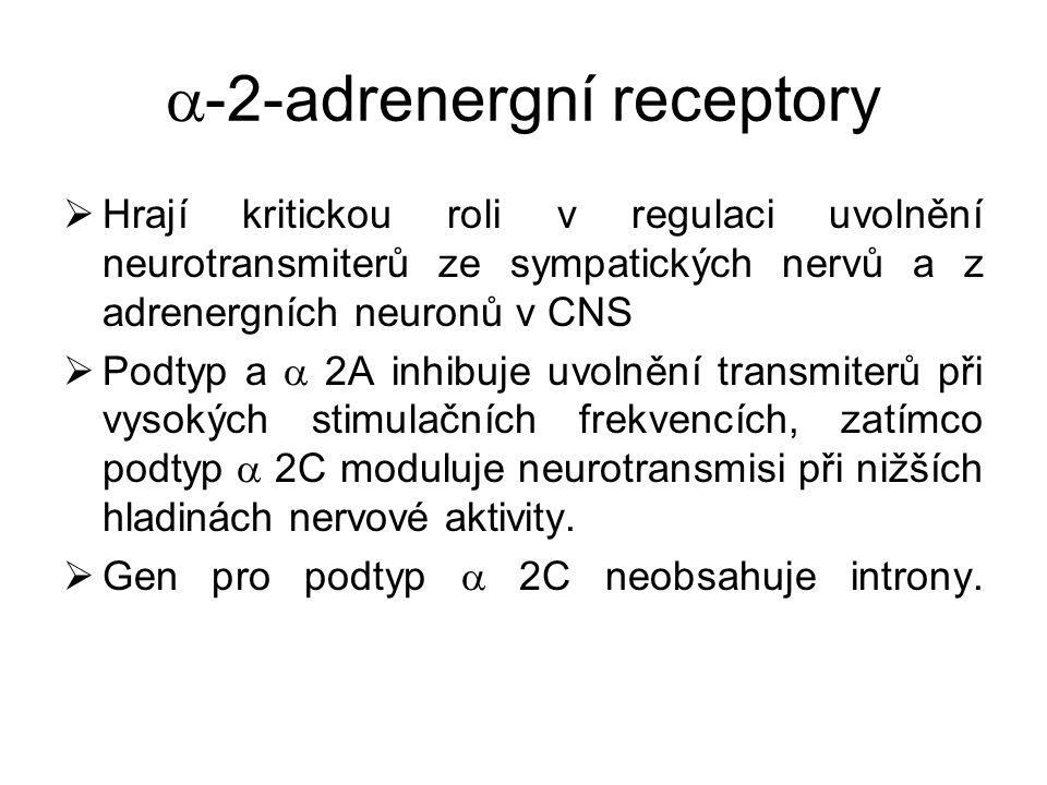  -2-adrenergní receptory  Hrají kritickou roli v regulaci uvolnění neurotransmiterů ze sympatických nervů a z adrenergních neuronů v CNS  Podtyp a
