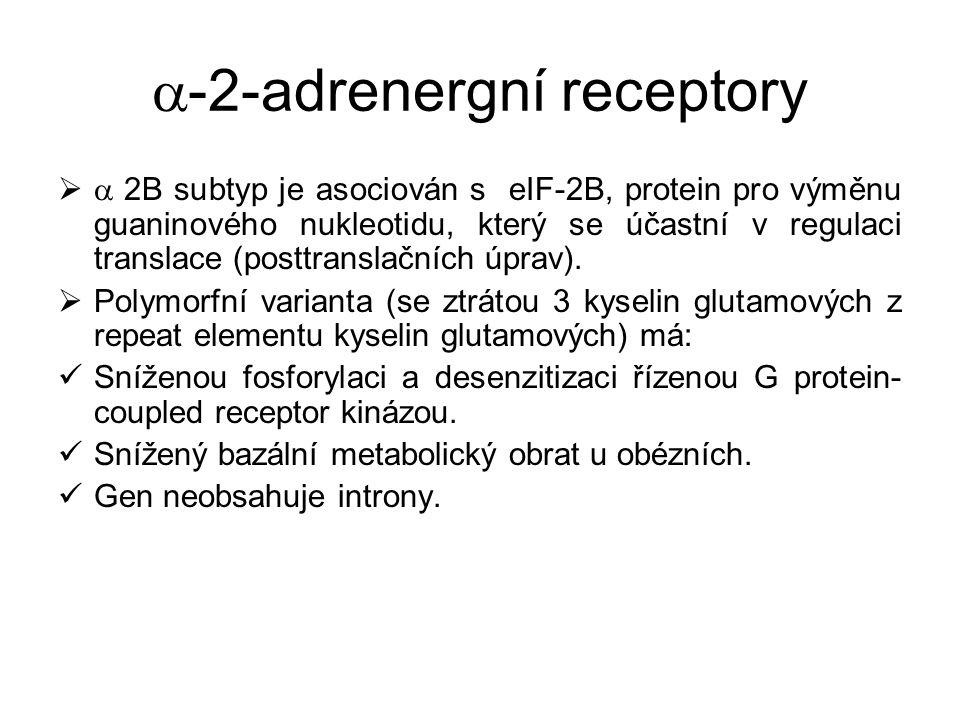  -2-adrenergní receptory   2B subtyp je asociován s eIF-2B, protein pro výměnu guaninového nukleotidu, který se účastní v regulaci translace (postt