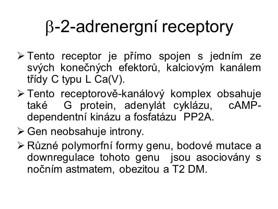  -2-adrenergní receptory  Tento receptor je přímo spojen s jedním ze svých konečných efektorů, kalciovým kanálem třídy C typu L Ca(V).  Tento recep