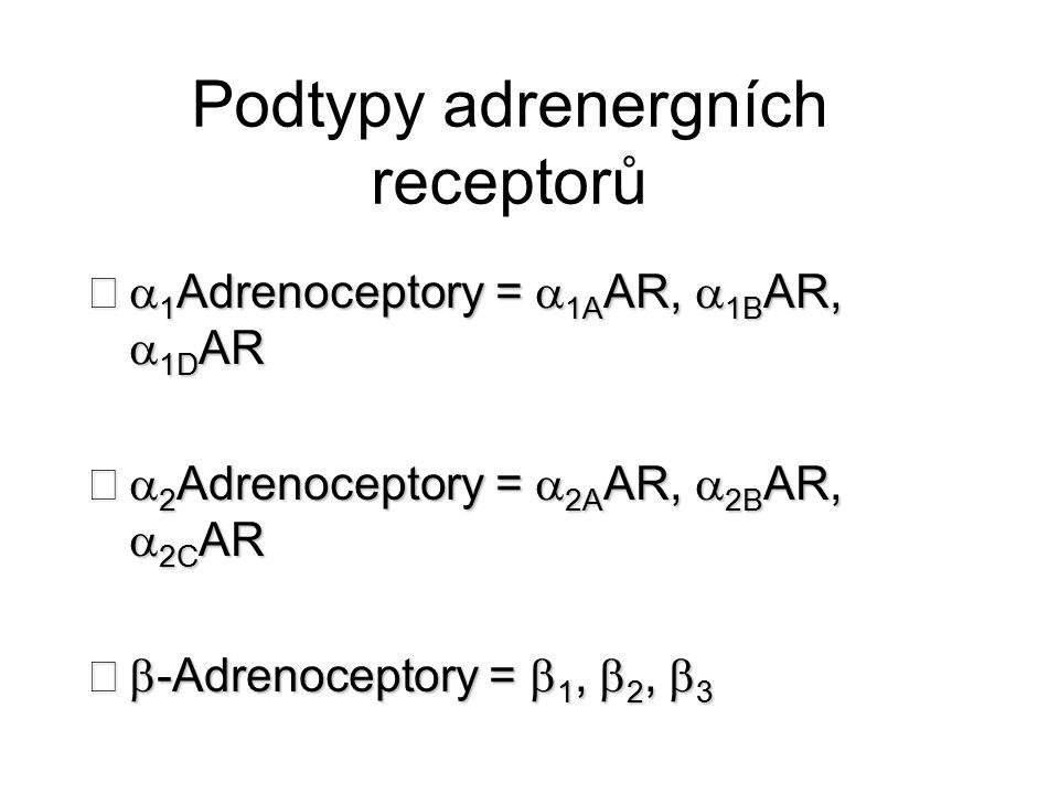  -2-adrenergní receptory  Hrají kritickou roli v regulaci uvolnění neurotransmiterů ze sympatických nervů a z adrenergních neuronů v CNS  Podtyp a  2A inhibuje uvolnění transmiterů při vysokých stimulačních frekvencích, zatímco podtyp  2C moduluje neurotransmisi při nižších hladinách nervové aktivity.