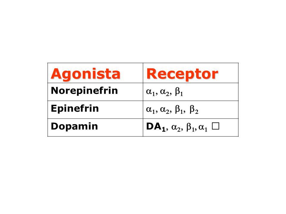 Agonista Receptor Norepinefrin       Epinefrin         Dopamin DA 1        
