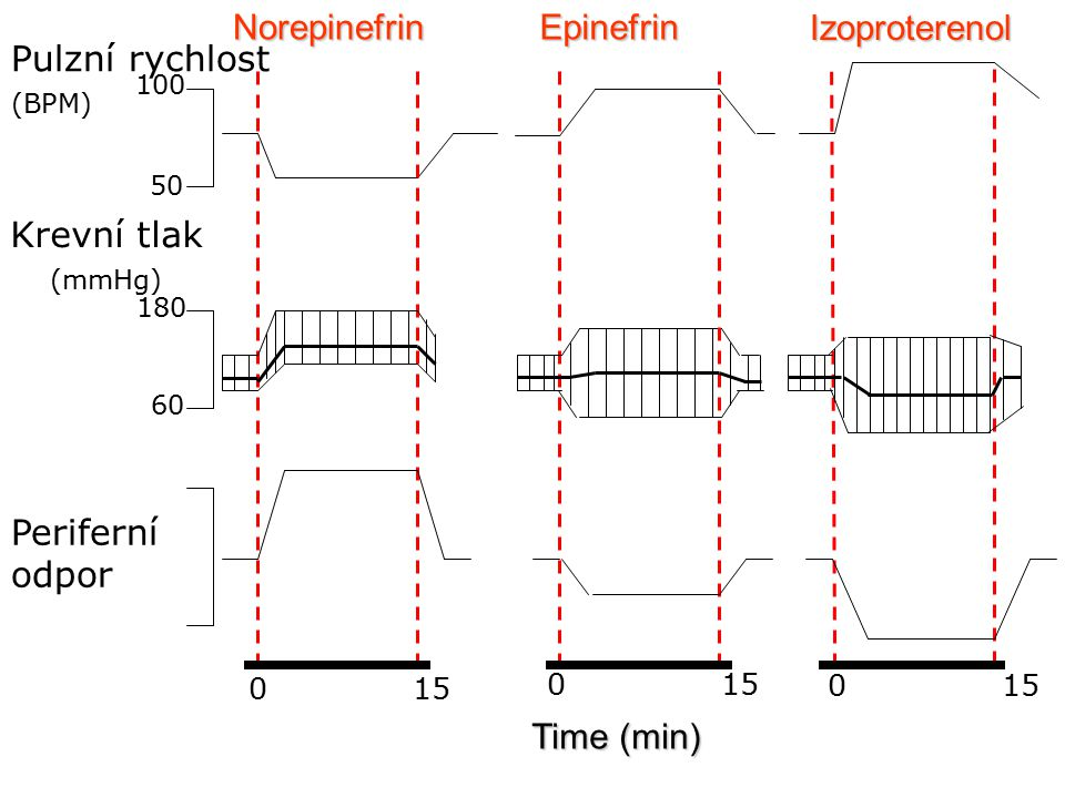 Charakteristiky podtypů adrenergních receptorů Receptor Agonisté Antagonisté TkáňOdpovědi Epi≥NE>>IsoCHSB HSBRV HSBRVJátra Střevní svalovina SrdceKontrakceKontrakce Glykogenolýza; Glukoneogeneze Hyperpolarizace a relaxace  kontraktilita arytmie CHSB= cévní hladké svalové buňky HSBRV-hladké svalové buňky reprodukčního a vylučovacího systému
