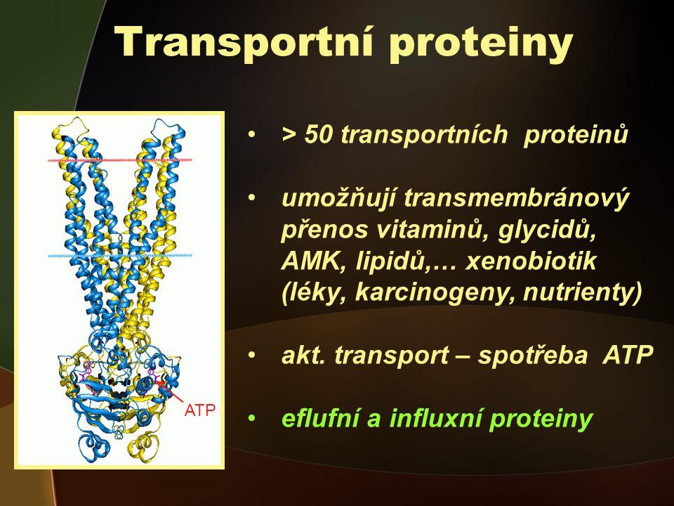 Transportní proteiny > 50 transportních proteinů umožňují transmembránový přenos vitaminů, glycidů, AMK, lipidů,… xenobiotik (léky, karcinogeny, nutrienty) akt.