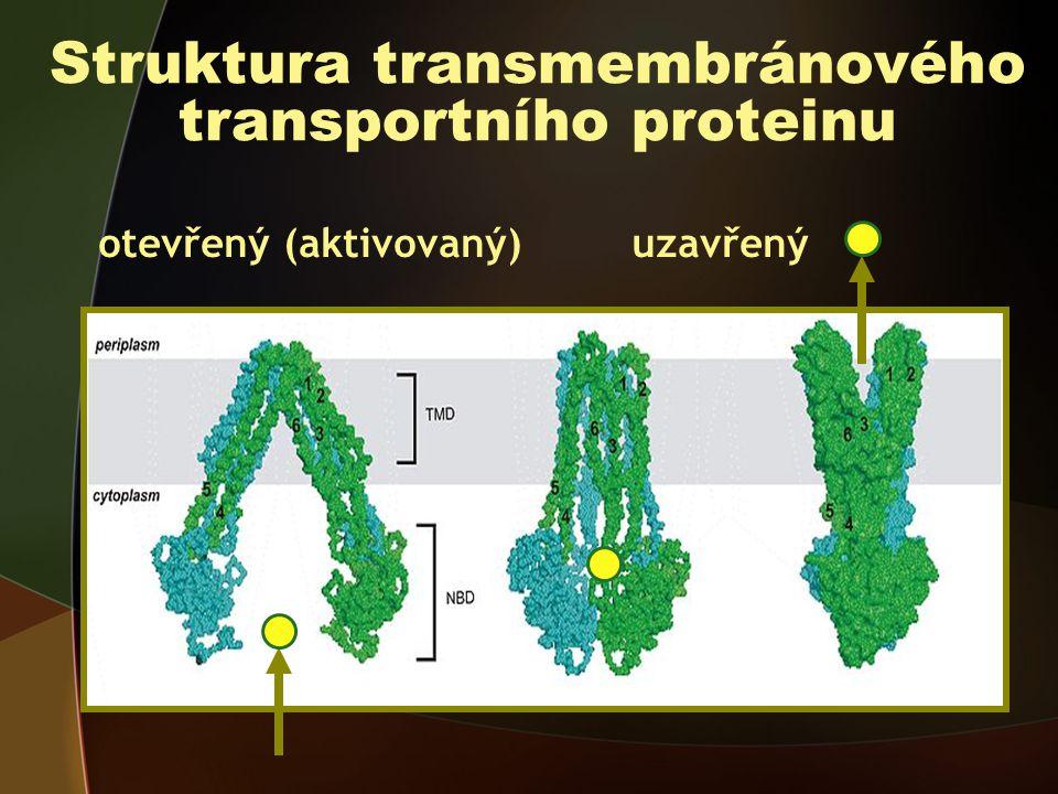 Struktura transmembránového transportního proteinu otevřený (aktivovaný) uzavřený