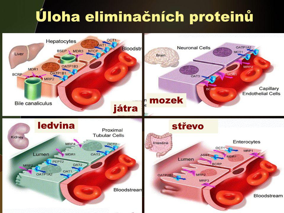 játra mozek střevo ledvina Úloha eliminačních proteinů