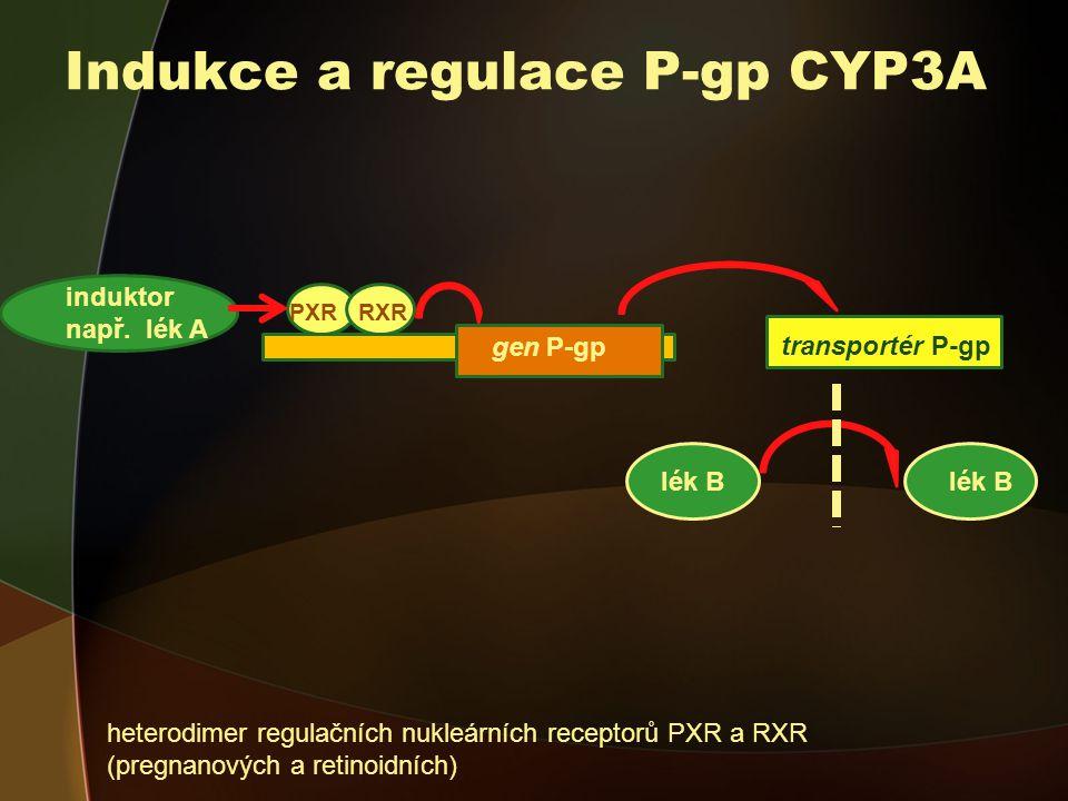 Indukce a regulace P-gp CYP3A induktor např.