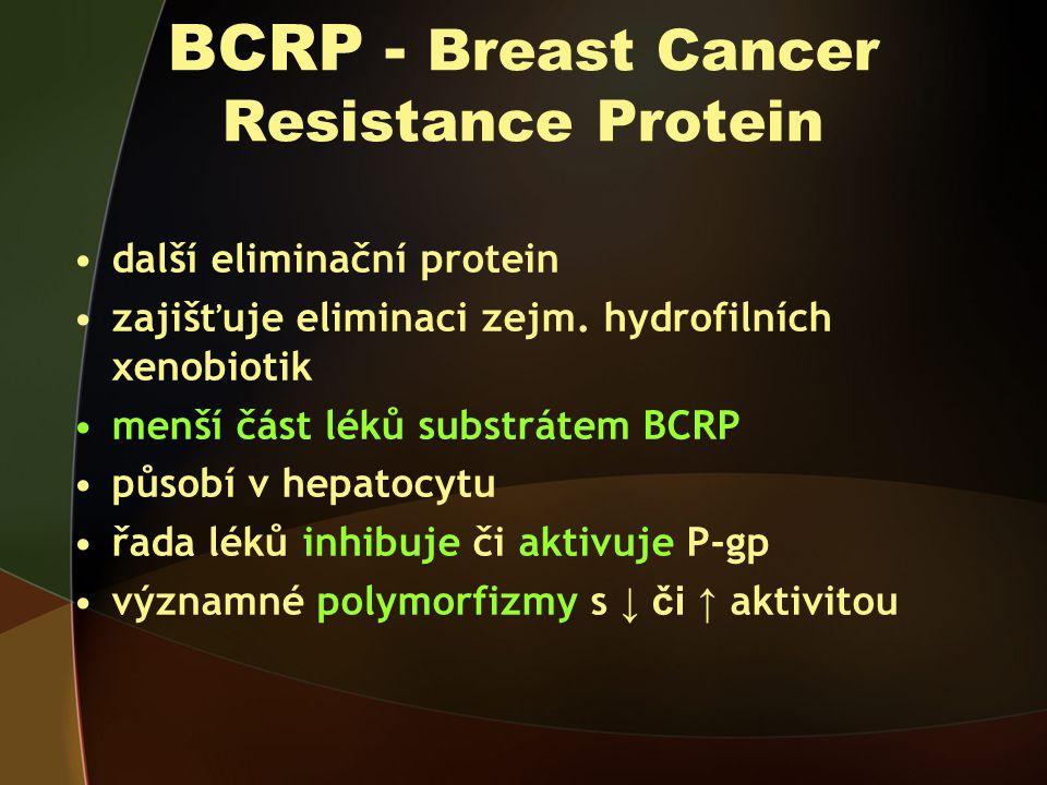 BCRP - Breast Cancer Resistance Protein další eliminační protein zajišťuje eliminaci zejm.