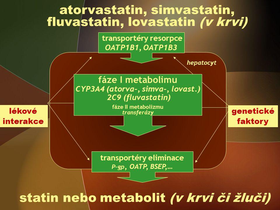 transportéry resorpce OATP1B1, OATP1B3 atorvastatin, simvastatin, fluvastatin, lovastatin (v krvi) statin nebo metabolit (v krvi či žluči) fáze I metabolimu CYP3A4 (atorva-, simva-, lovast.) 2C9 (fluvastatin) fáze II metabolizmu transferázy hepatocyt transportéry eliminace P-gp, OATP, BSEP,… lékové interakce genetické faktory