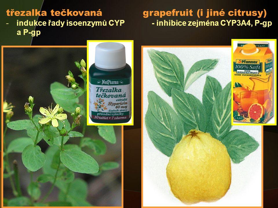 třezalka tečkovaná grapefruit (i jiné citrusy) -indukce řady isoenzymů CYP - inhibice zejména CYP3A4, P-gp a P-gp