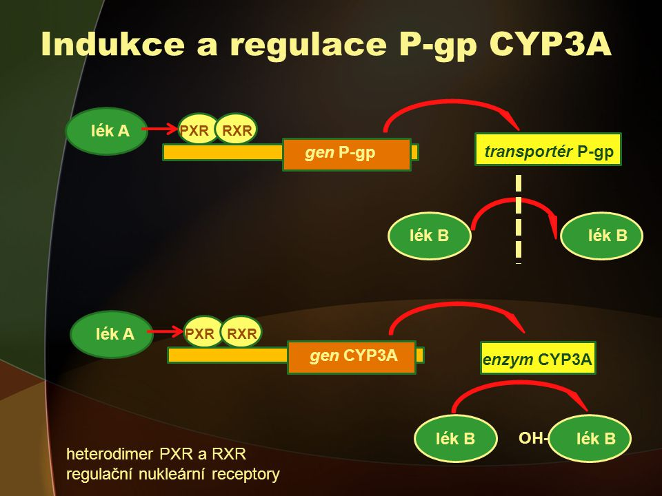 Indukce a regulace P-gp CYP3A lék A lék B gen CYP3A PXRRXR enzym CYP3A OH- lék A lék B gen P-gp PXRRXR transportér P-gp heterodimer PXR a RXR regulační nukleární receptory
