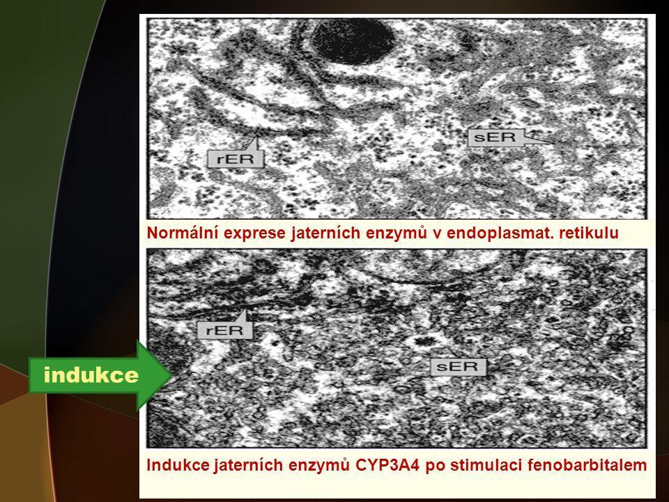 Indukce jaterních enzymů CYP3A4 po stimulaci fenobarbitalem Normální exprese jaterních enzymů v endoplasmat.
