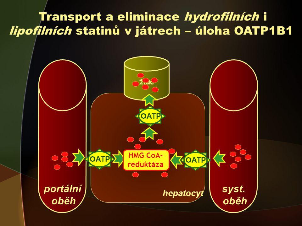 portální oběh Transport a eliminace hydrofilních i lipofilních statinů v játrech – úloha OATP1B1 hepatocyt žluč syst.