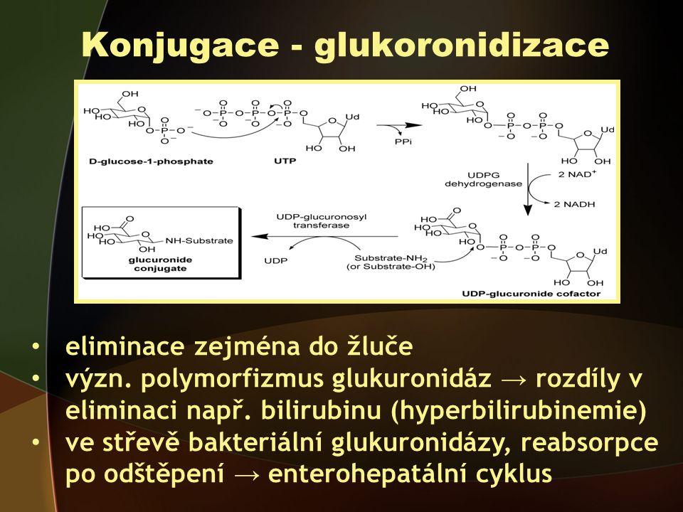 Konjugace - glukoronidizace eliminace zejména do žluče význ.