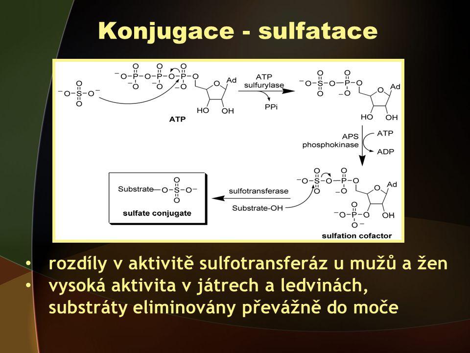 Konjugace - sulfatace rozdíly v aktivitě sulfotransferáz u mužů a žen vysoká aktivita v játrech a ledvinách, substráty eliminovány převážně do moče