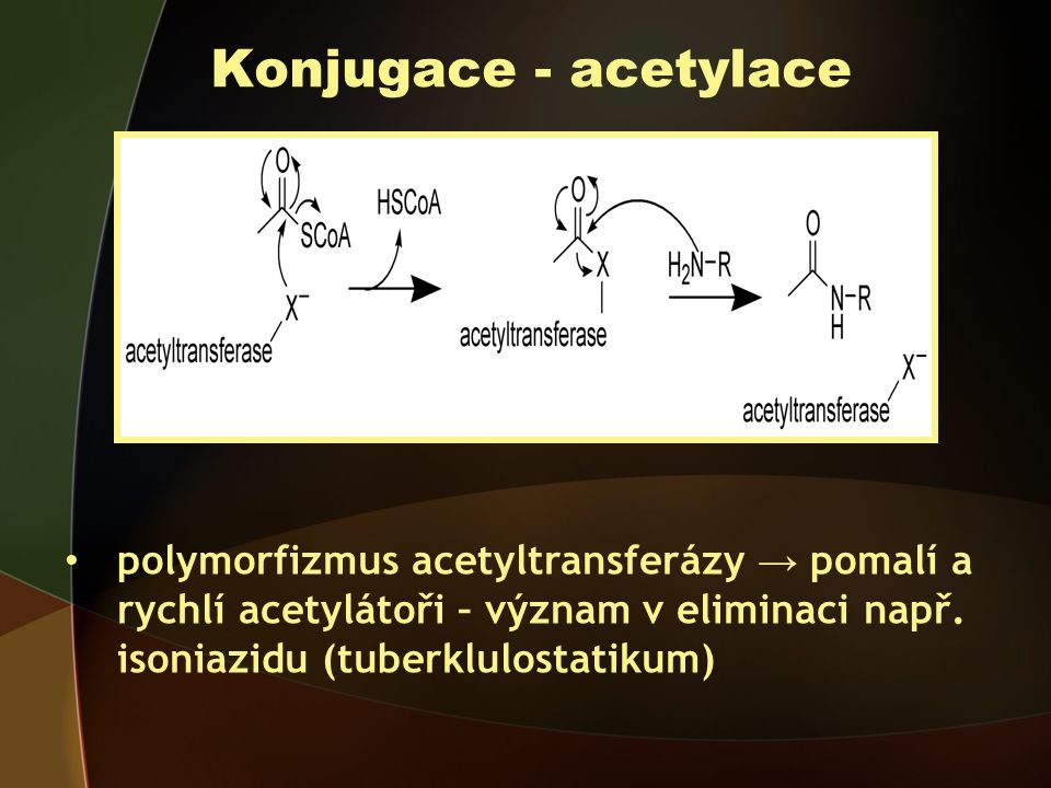 Konjugace - acetylace polymorfizmus acetyltransferázy → pomalí a rychlí acetylátoři – význam v eliminaci např.