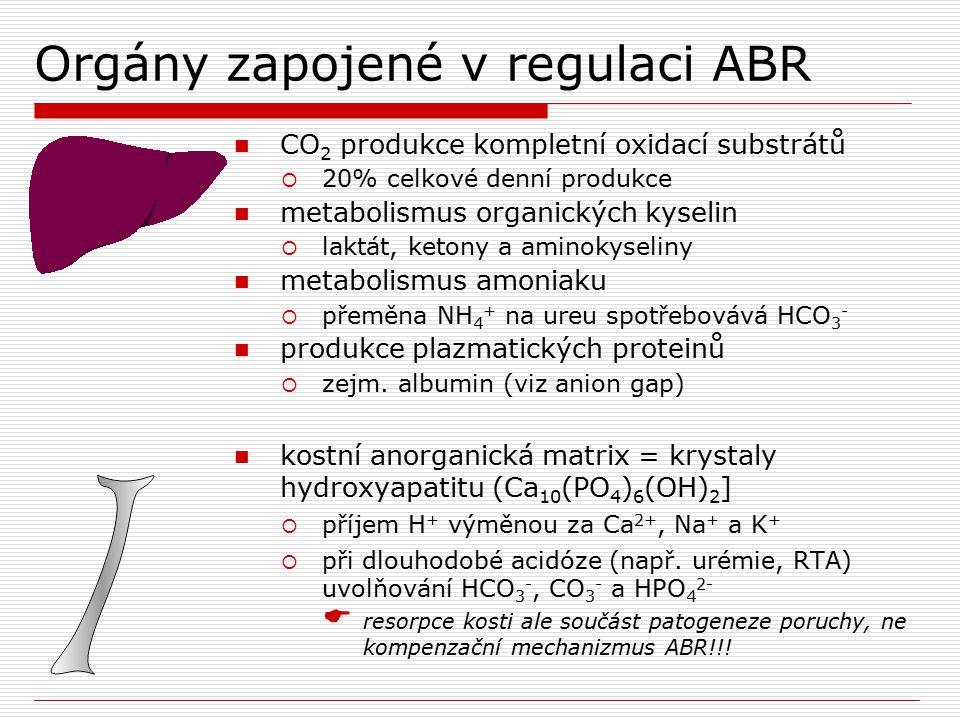 Orgány zapojené v regulaci ABR CO 2 produkce kompletní oxidací substrátů  20% celkové denní produkce metabolismus organických kyselin  laktát, keton