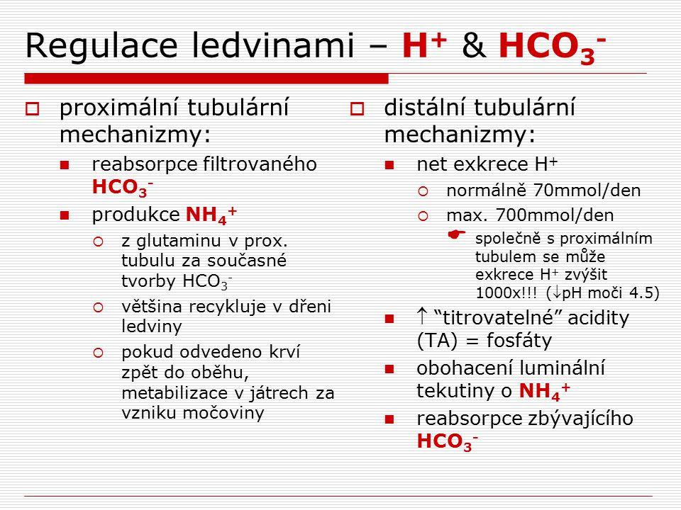 Regulace ledvinami – H + & HCO 3 -  proximální tubulární mechanizmy: reabsorpce filtrovaného HCO 3 - produkce NH 4 +  z glutaminu v prox. tubulu za