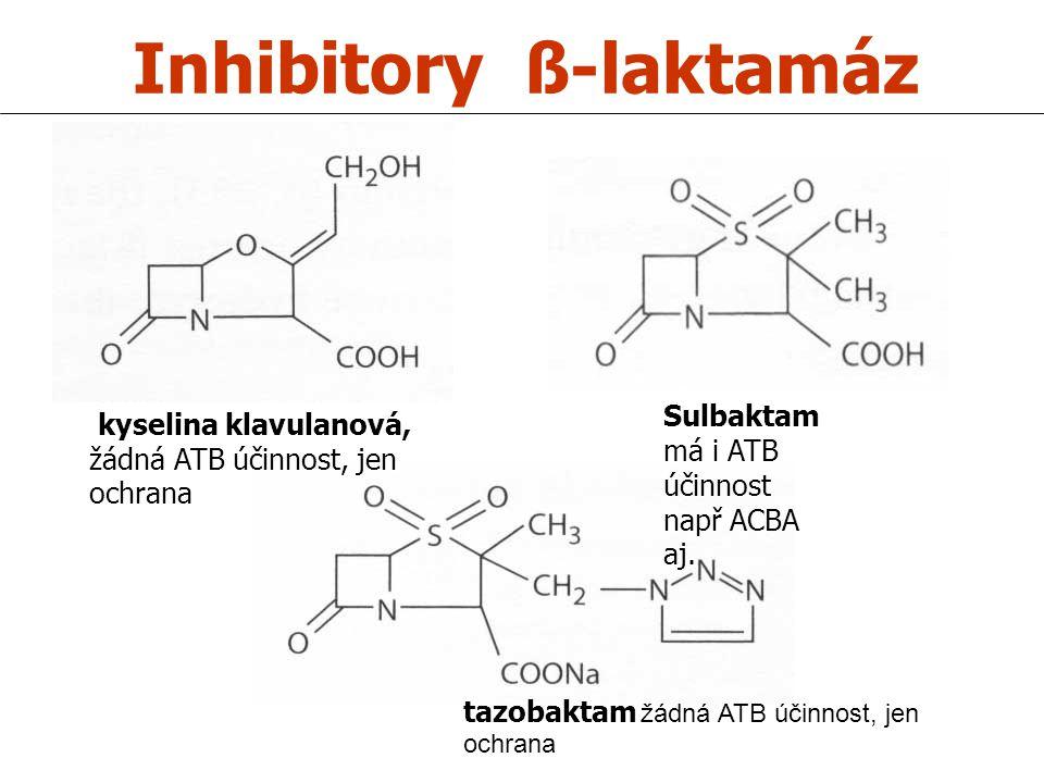 Inhibitory ß-laktamáz kyselina klavulanová, žádná ATB účinnost, jen ochrana Sulbaktam má i ATB účinnost např ACBA aj. tazobaktam žádná ATB účinnost, j