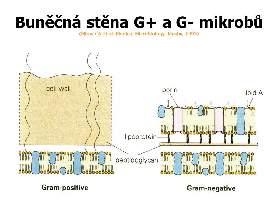 Relativně úzké spektrum Některé nestálé v kyselém prostředí žaludku Biologická dostupnost (F) ( podíl metabolicky nezměněného léčiva z podané dávky, který se po podání dostane do systémové cirkulace) úměrná kvalitě lékové formy (30 - 60 %) Vazba na bílkoviny plazmy 65 - 80% (ATB se reverzibilně váží na bílkoviny plasmy, dynamický proces, v plasmě se neustále obnovuje rovnováha mezi volným a vázaným podílem farmaka.
