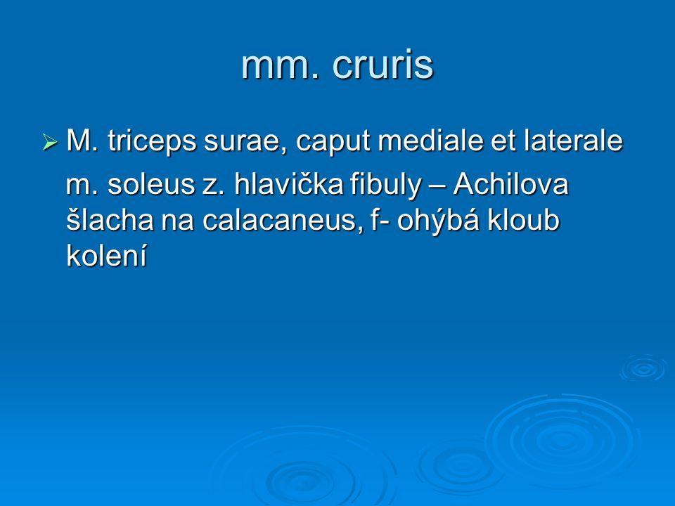 mm. cruris  M. triceps surae, caput mediale et laterale m. soleus z. hlavička fibuly – Achilova šlacha na calacaneus, f- ohýbá kloub kolení m. soleus
