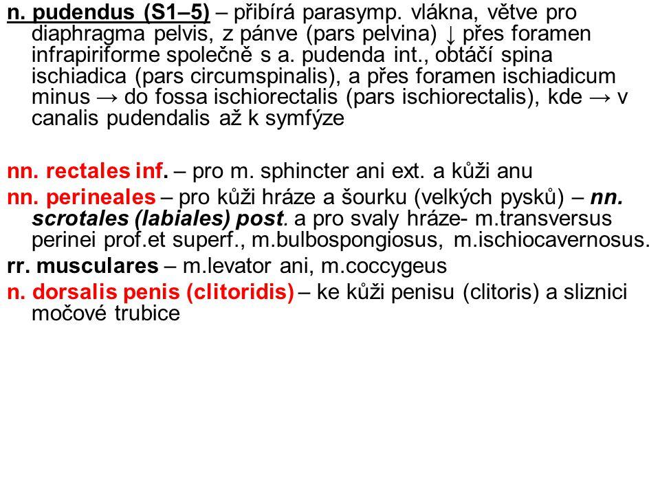 n.pudendus (S1–5) – přibírá parasymp.