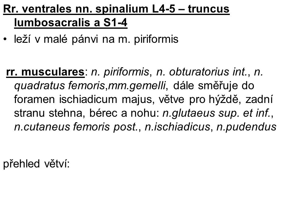 Rr.ventrales nn. spinalium L4-5 – truncus lumbosacralis a S1-4 leží v malé pánvi na m.