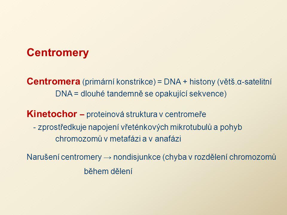 Centromery Centromera (primární konstrikce) = DNA + histony (větš.α-satelitní DNA = dlouhé tandemně se opakující sekvence) Kinetochor – proteinová str