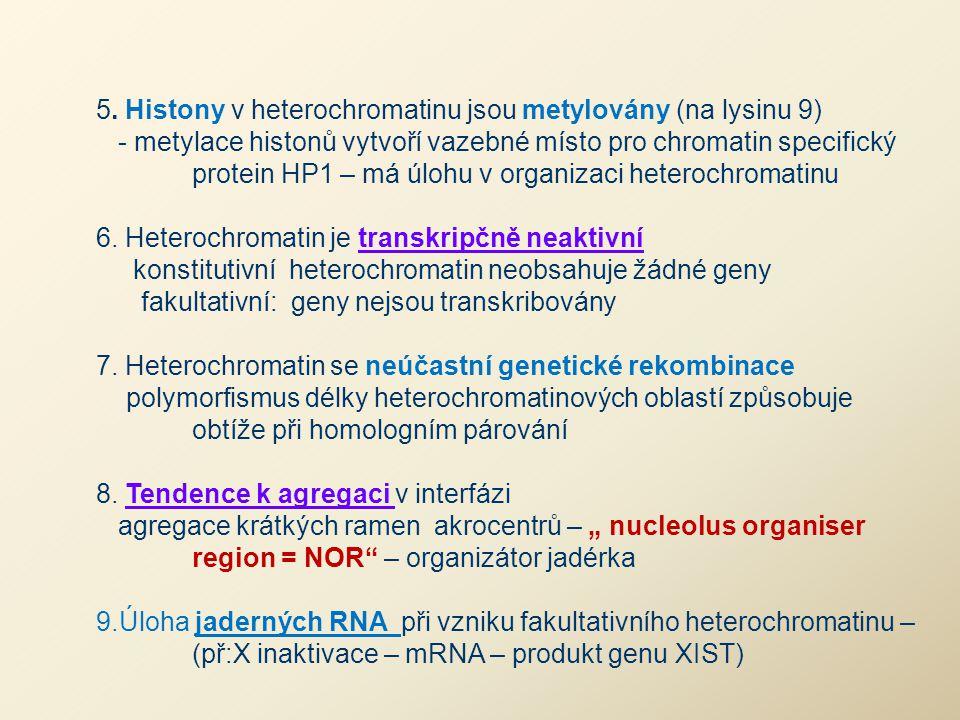 5. Histony v heterochromatinu jsou metylovány (na lysinu 9) - metylace histonů vytvoří vazebné místo pro chromatin specifický protein HP1 – má úlohu v