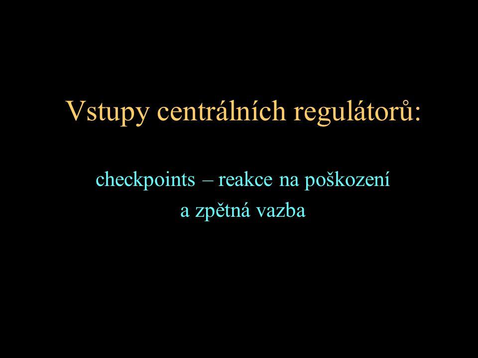 Vstupy centrálních regulátorů: checkpoints – reakce na poškození a zpětná vazba