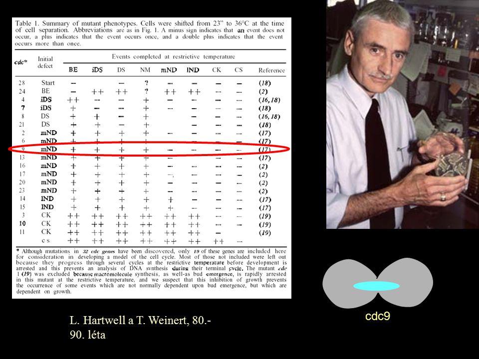 L. Hartwell a T. Weinert, 80.- 90. léta cdc9