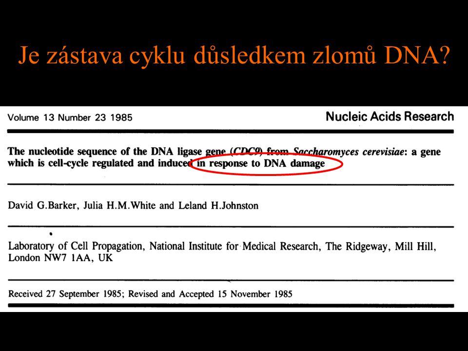 Mutace zvyšující citlivost ke zlomům: rad (radiation sensitive) wt rad9 UV (mrtvé se barví methylenovou modří)