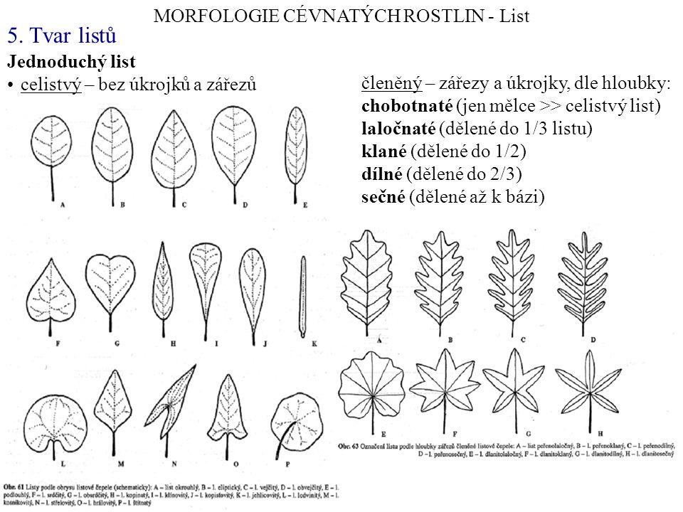 Jednoduchý list celistvý – bez úkrojků a zářezů MORFOLOGIE CÉVNATÝCH ROSTLIN - List 5. Tvar listů členěný – zářezy a úkrojky, dle hloubky: chobotnaté