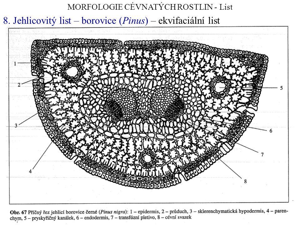 MORFOLOGIE CÉVNATÝCH ROSTLIN - List 8. Jehlicovitý list – borovice (Pinus) – ekvifaciální list