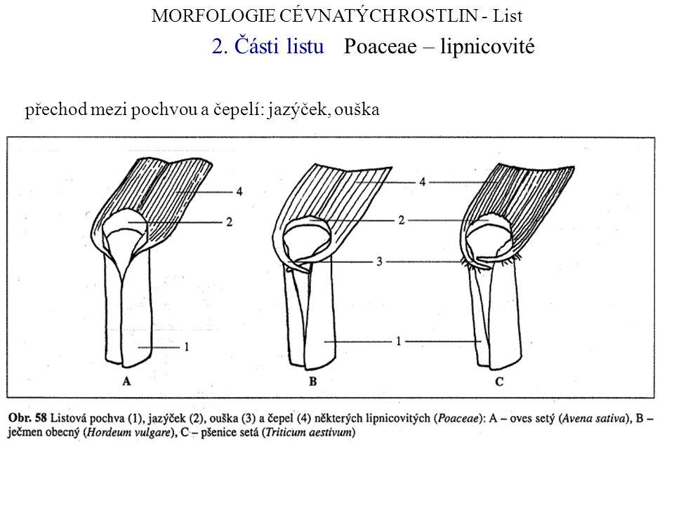 MORFOLOGIE CÉVNATÝCH ROSTLIN - List 2. Části listuPoaceae – lipnicovité přechod mezi pochvou a čepelí: jazýček, ouška
