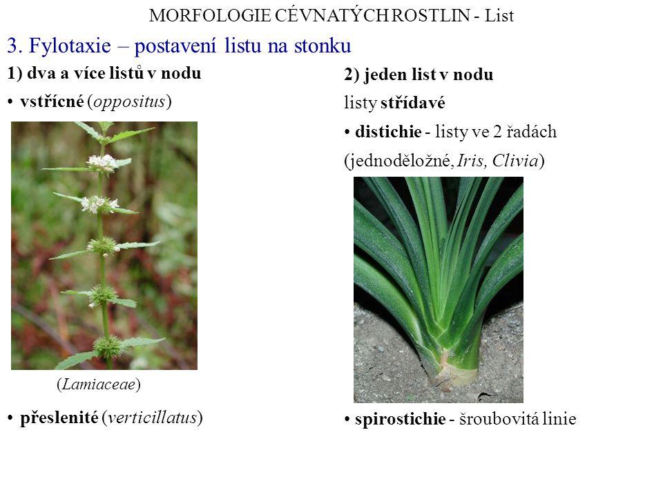 1) dva a více listů v nodu vstřícné (oppositus) přeslenité (verticillatus) 3. Fylotaxie – postavení listu na stonku MORFOLOGIE CÉVNATÝCH ROSTLIN - Lis