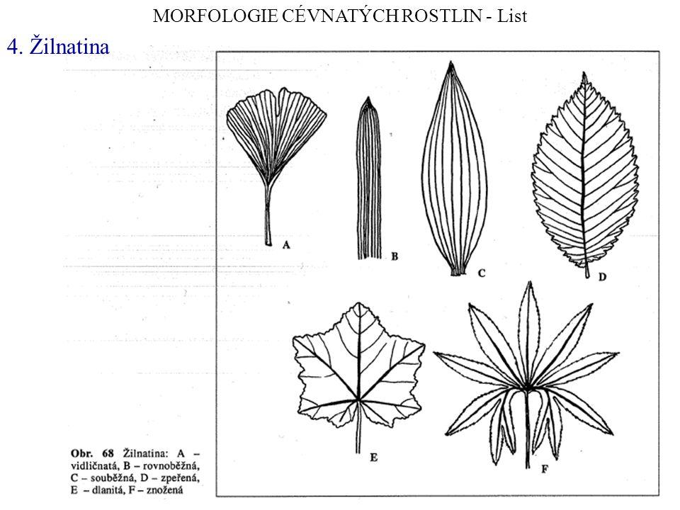 Sukulentní rostliny bezlisté stonkové sukulenty - chylokauly listové sukulenty - chylofyly Pleiospilos spp.
