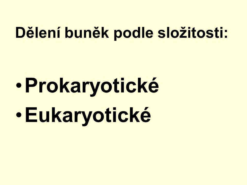 Prokaryotická buňka buňka nemá ohraničené jádro membránou jaderná hmota (DNA) leží volně v cytoplazmě např.