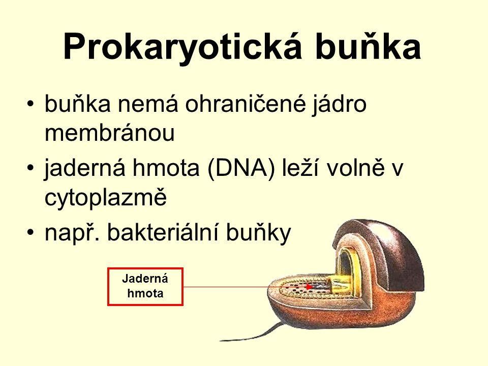 Eukaryotická buňka jádro je ohraničené jadernou membránou v cytoplazmě jsou buněčné organely buňky rostlin, živočichů a hub Jádro Buněčná organela