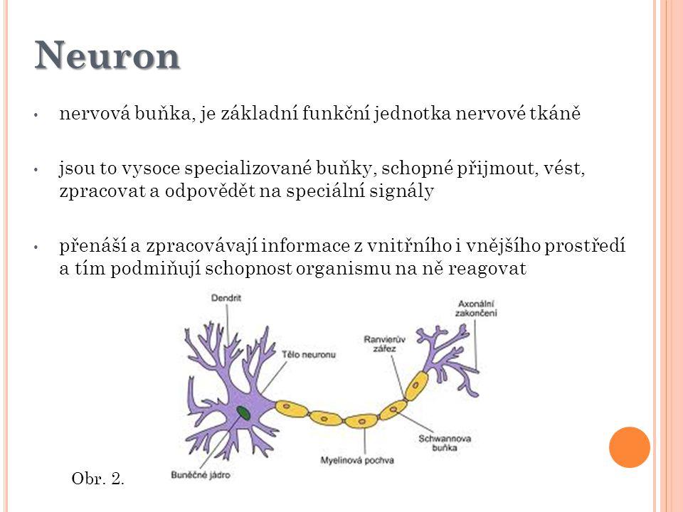 Neuron nervová buňka, je základní funkční jednotka nervové tkáně jsou to vysoce specializované buňky, schopné přijmout, vést, zpracovat a odpovědět na